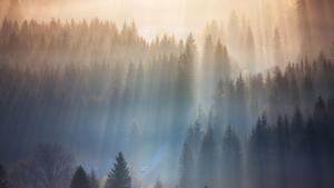 Это не горы в Польше, а ежик в тумане