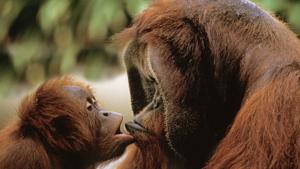 Поцелуй меня, потом я тебя, потом вместе мы поцелуемся!