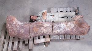 Найдены останки крупнейшего динозавра на планете