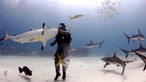 Опасные акулы, ставшие ласковыми кошками