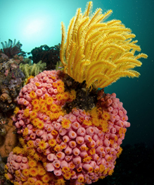Магия кораллов