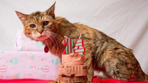 Если бы кошка была человеком, ей было бы 114 лет