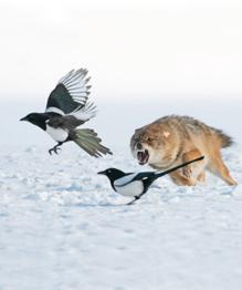 Зверская охота