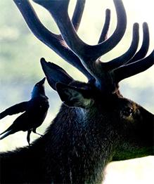 В мире животных: сколько фото, столько характеров