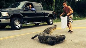 Не ловите аллигатора голыми руками!