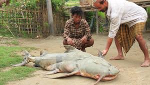 В индийской деревне поймали гиганта