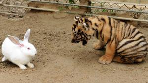 Кролик заигрался с хищниками