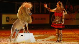 Пони с задатками льва. И такое бывает!