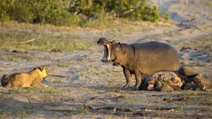 Не опоздайте! Раздача дохлых слонов. И другие зооистории