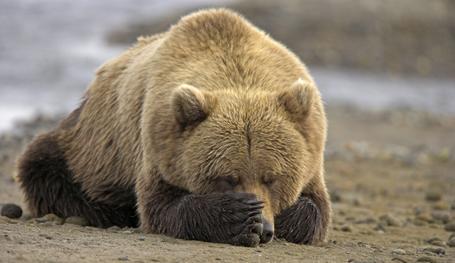 Как спят животные - забавные фото