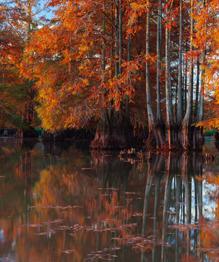 Отражения осеннего леса