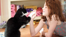 Кошки призваны наблюдать за людьми