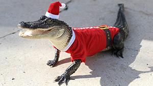 """""""Зубастые"""" Санта-Клаусы"""