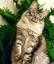 Кошки: откуда в их глазах такие тайны?