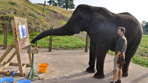 Чудо-слониха