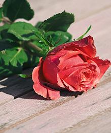 Гении дня (22.06): романтики