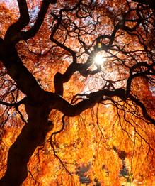 Буйство красок художницы Осень. Наслаждайтесь!
