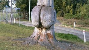 Древесные байки