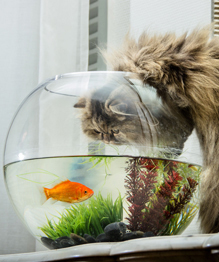 Десять кошачьих профессий. Выбирайте специалистов!