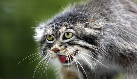 Коты - дикие, но симпатичные...