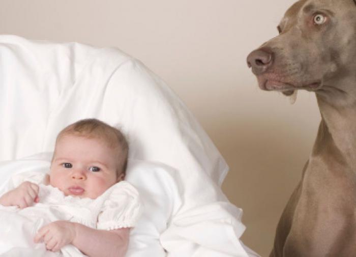 Собака и новорожденный ребенок