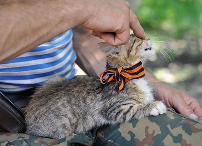 Кот с георгиевской ленточкой