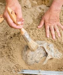 Археология. Последние новости по теме
