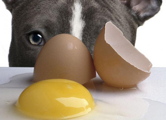 Собака и сырые яйца